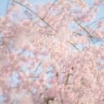 神宮外苑の桜・親子で楽しめる施設もたくさんあります!