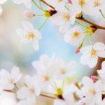 新宿の桜おすすめスポット【戸山公園】子どもが走り回れる!