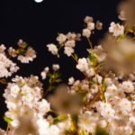 Midtown Blossom2019・東京ミッドタウンのおしゃれなお花見!子連れもOK!